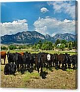 Boulder Beef Canvas Print