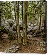 Boulder Woods Canvas Print