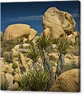 Boulders In The Joshua Tree National Park Canvas Print