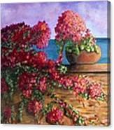 Bountiful Bougainvillea Canvas Print