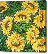 Bountiful Sunflowers Canvas Print