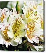 Bouquet Of Alstroemeria Canvas Print