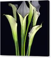Bouquet of Callas Canvas Print