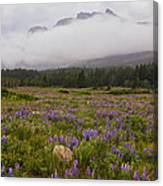 Bouquet Of Glacier Canvas Print
