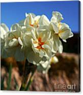 Bouquet Of Narcissus Canvas Print
