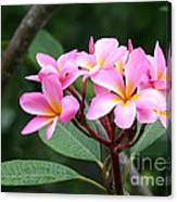 Bouquet Of Pink Plumeria Canvas Print