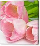 Bouquet Of Pink Tulips. Canvas Print