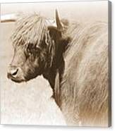 Bovine With Bangs Canvas Print