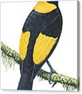 Bowerbird  Canvas Print