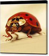 Bowing Ladybug . Art And Frame Print Only Canvas Print