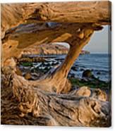 Bowling Ball Beach Framed In Driftwood Canvas Print