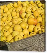Box Of Golden Apples Canvas Print