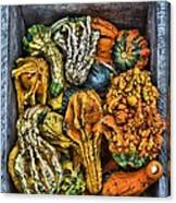 Box Of Gourds Canvas Print