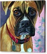 Boxer Dog Portrait Canvas Print