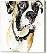 Boxer Dog Poster Canvas Print