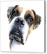 Boxer Expression Canvas Print
