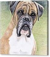 Boxer Portrait Canvas Print