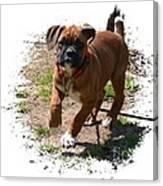Boxer Puppy 14-1 Canvas Print