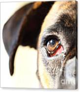 Boxer's Eye Canvas Print