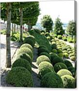Boxwood Garden Globes Canvas Print