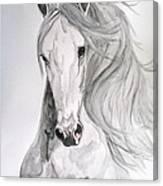 Boyardo Canvas Print