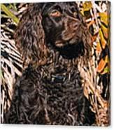 Boykin Spaniel Portrait Canvas Print