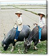 Boys On Water Buffalo In Countryside-vietnam Canvas Print