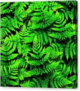 Bracken Ferns Canvas Print