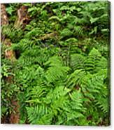 Bracken Canvas Print