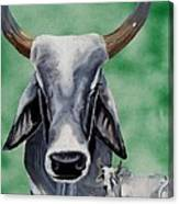 Brahma Bull Canvas Print