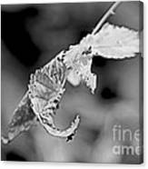 Bramble Leaves - Black And White Canvas Print
