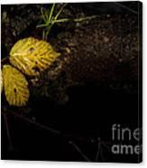 Bramble Tree Canvas Print