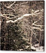 Branch In Forest In Winter Canvas Print