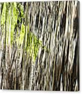 Branch In Waterfall Canvas Print