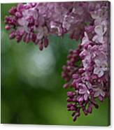 Branch With Spring Lilac Flowers Canvas Print