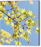 Branche In Springtime Canvas Print