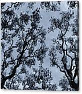Branches Across Canvas Print