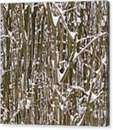 Branches And Twigs Covered In Fresh Snow Canvas Print