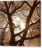 Branches In The Dark 2 Canvas Print