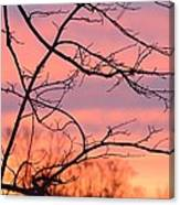 Branches Meet The Sky Canvas Print