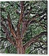 Branches Of Brio Canvas Print