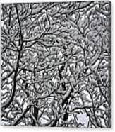 Branches Of Our Life Canvas Print