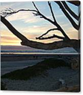 Branches Over The Beach Canvas Print