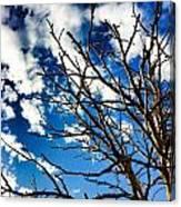 Branching Light  Canvas Print