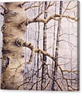 Branching Poplar Canvas Print