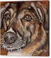 Brandi Canvas Print