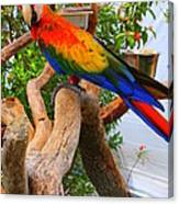 Brazilian Parrot Canvas Print