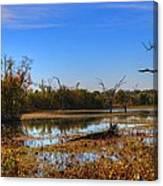 Brazos Bend Swamp Canvas Print
