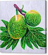 Bread Fruit Canvas Print