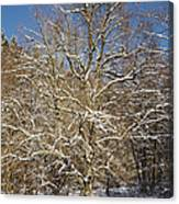 Break Under A Large Tree - Sunny Winter Day Canvas Print